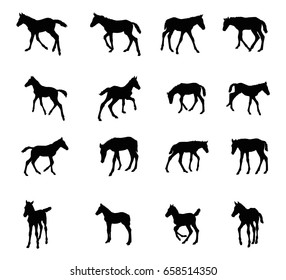 Set of vector standing, trotting, galloping foals black silhouettes isolated on white background