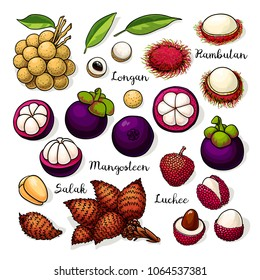 Set of vector tropical fruits: longan, rambutan, mangosteen, salak, luchee. Hand drawn collection for design, isolated on white