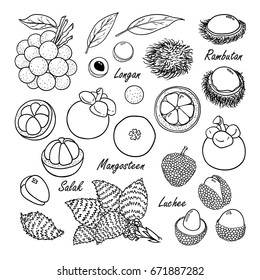 Set of vector tropical fruits: longan, rambutan, mangosteen, salak, luchee. Hand drawn collection for design, isolated on white. Black lines sketch