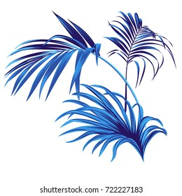 Set of vector tropical leaves. vector palm elements for graphic design. Beautiful botanical illustrations of elegant palm branches. Tropical silhouette palm.