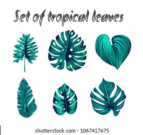 Set of Vector tropical palm leaves, jungle leaves, split leaf, philodendron leaves, illustration isolated on white background