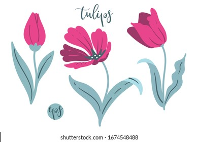 Set of vector tulips. Season spring flowers