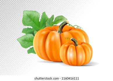 Set vegetable pumpkins with green leaves isolated on transparent background. Realistic vector, 3d illustration