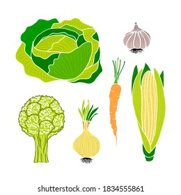 Set of vegetables - corn, garlic, carrot, beet, onion, white cabbage and cauliflower. Vector elements for design. Autumn harvest.