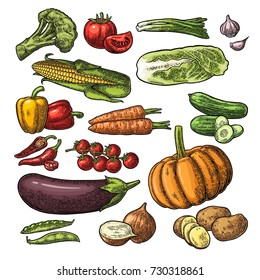 Set vegetables. Cucumbers, Napa cabbage, Pea pod, Onion, Garlic, Corn, Pepper, Broccoli, Potato and Tomato. Isolated on the white background. Vector black hand drawn vintage engraving illustration