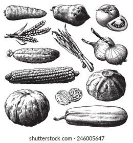 Set of vegetables, fruits and plants hand drawn vector illustration