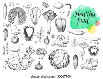 Set vegetables and herbs. Healthy vegetarian food. Vintage black and white illustration in the style of engravings. Hand drawn vector background. Watercolor stains.