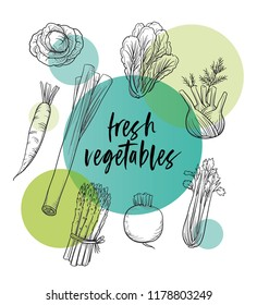 Set of vegetables line drawing on colorful transparent circles. With fennel, turnip, cauliflower, leek, carrot, asparagus, celery and cabbage. Hand drawn doodle vector illustration.