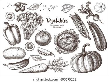Set vegetables. Vector hand drawn vintage engraving illustration for poster, label and menu.