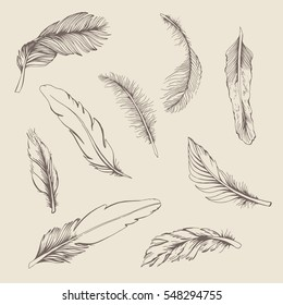 Set vintage feather on beige background. Hand drawing illustration for your design