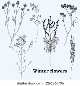 Set of vintage herbs and flowers. Hand drawn vector illustration.