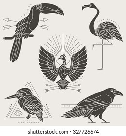 Set of vintage thin line bird labels & badges. Retro vector design graphic element, emblem, logo, insignia, sign, identity, logotype, poster. Stroke line objects with typographic for t-shirt prints.
