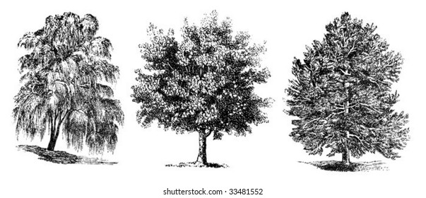 set of vintage trees drawing