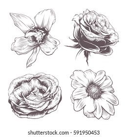 Set of vintage vector flowers isolated on white background. Orchid, rose and chamomile flowers. Old fashioned style flowers art. Hand drawn illustration.