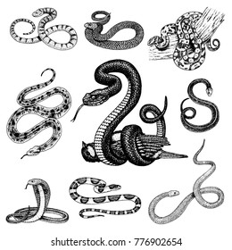 Serpent Images, Stock Photos & Vectors | Shutterstock
