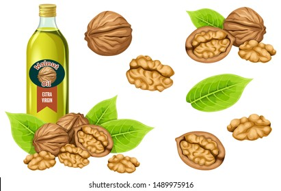 Set walnut oil, seed and leaf. Isolated vector illustration on white background.