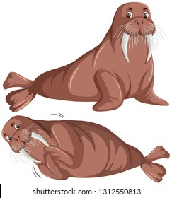 Set of walrus character illustration