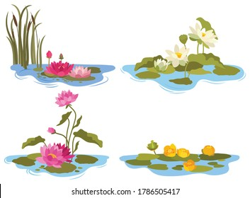 Set of water lilies. Collection of different types of lake flowers. Color stylized lotuses. Botany. Colorful illustration for children.
