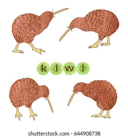 Set of watercolor Kiwi birds isolated on white. Vector illustration.