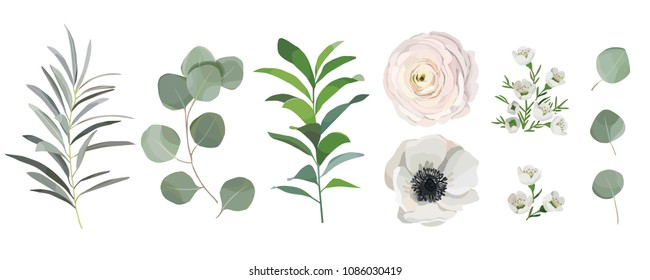 set of watercolor leaves, anemone ranunculus flowers, and eucalyptus branches. Design elements for patterns, wreath, laurels and compositions, greeting cards, wedding invitations. floral concept