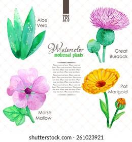 Set of watercolor madicinal plants such as great burdock, marsh mallow, aloe vera and pot marigold
