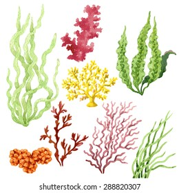 Set of watercolor seaweed and corals isolated on white.
