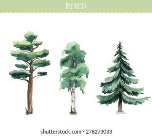 Set of watercolor trees. Birch, pine, fir-tree. Vector
