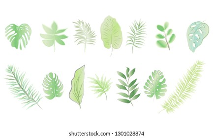 Set of watercolor tropical leaf collection, Summer plant soft color, Green leaves element for decoration, Botany art with brush, Isolated white background