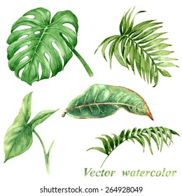 Set of watercolor tropical plants  leaves.