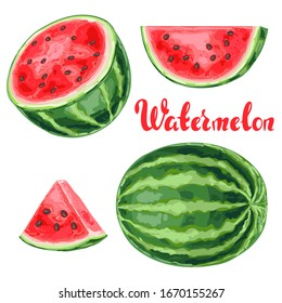 Set of watermelons and slices. Summer fruit decorative illustration.