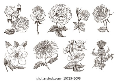Daffodil Tattoo Images Stock Photos Vectors Shutterstock