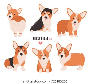 Set of welsh corgi in different postures. Small cute dog of herding breed isolated on white background. Funny pet animal in various positions. Flat cartoon character. Colorful vector illustration.