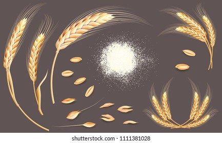 Set of wheat ears, grains and flour. Realistic bakery collection. Autumn harvest. Vector elements for your design.