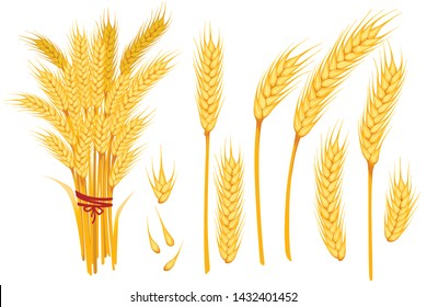 Set of wheat yellow ripe spikelets and grains of wheat flat vector illustration isolated on white background