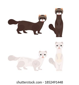 Set of white and brown minks. Mink in a flat style. Isolated, vector.