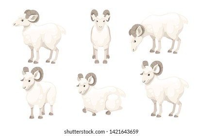 Set of white horned mountain ram sheep cartoon character design flat vector animal illustration isolated on white background