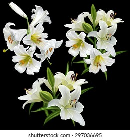 set of white lily flowers isolated.