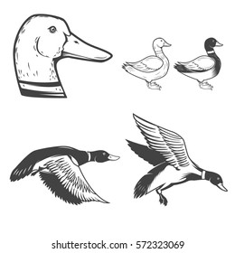 Set of wild ducks icons isolated on white background. Duck hunting. Design elements for logo, label, badge, sign. Vector illustration