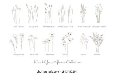 set of wild grass, grain, cereal and Dried flowers in vector line art style. Grass Collection for bohemian wedding and decoration