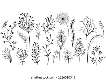 Set of wild plants, Black and white illustration.