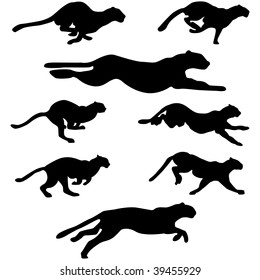 Set of Wildcats (Puma) Running Pose silhouettes. Run, Jump, Attack, Pursue, Chase. High Detail Smooth. Vector Illustration.