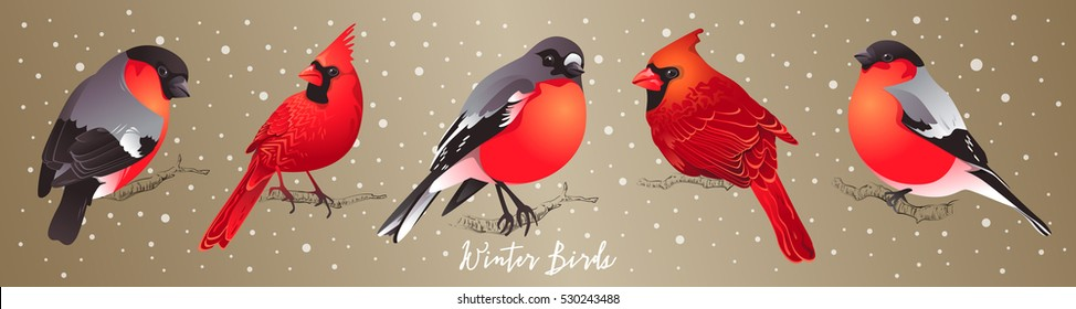 Set of winter birds. Cardinal and Bullfinch. Vector illustration for Christmas and New Year's greeting cards, invitations, media banners, printed material design.