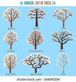 Set of winter trees on white background. Apple tree, Oak tree, Rowan, Red maple, Horse chestnut tree, Sakura, Ginkgo biloba, Japanese maple, Birch. Vector illustration