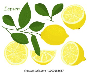 Set of yellow whole and chopped lemon Isolated on white background. Botanical drawing doodle art. Tropical Citrus Fruit pattern. Healthy food frame Vector illustration.
