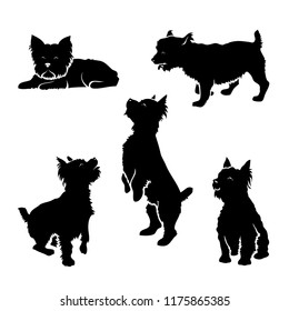 Set of Yorkshire terrier silhouettes - isolated vector illustration