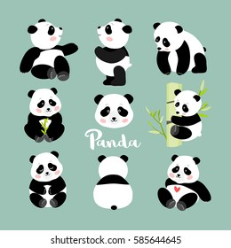Set of young panda positions, isolated vector illustration