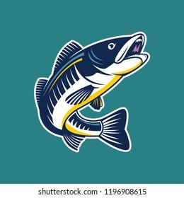 Set of zander fish / predator fish illustration. Design elements for logo, label, emblem, sign, brand mark. Vector illustration.