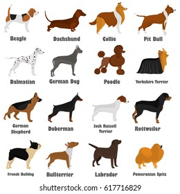 Seth of different breeds of dogs color flat icon s for web and mobile design