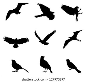 Sets of silhouette birds flying icon, in various species and action expression, create by vector