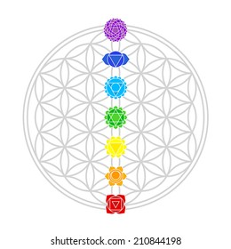 Seven main chakras match perfectly onto the junctions of the Flower of Life. Isolated vector illustration over white background.